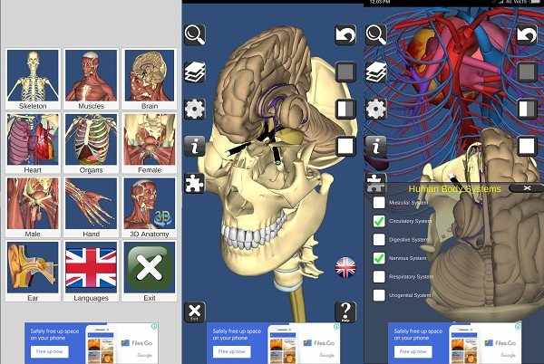 android 3D Bones and Organs