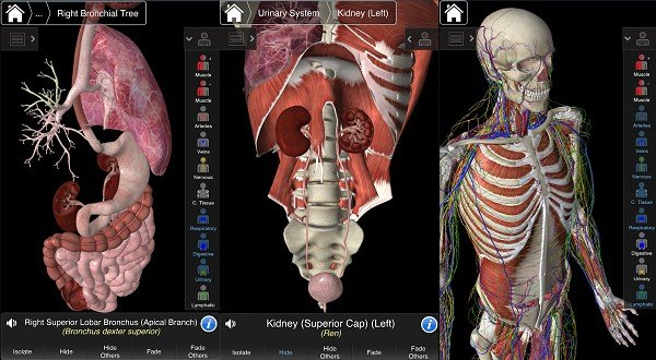 android Essential Anatomy 3