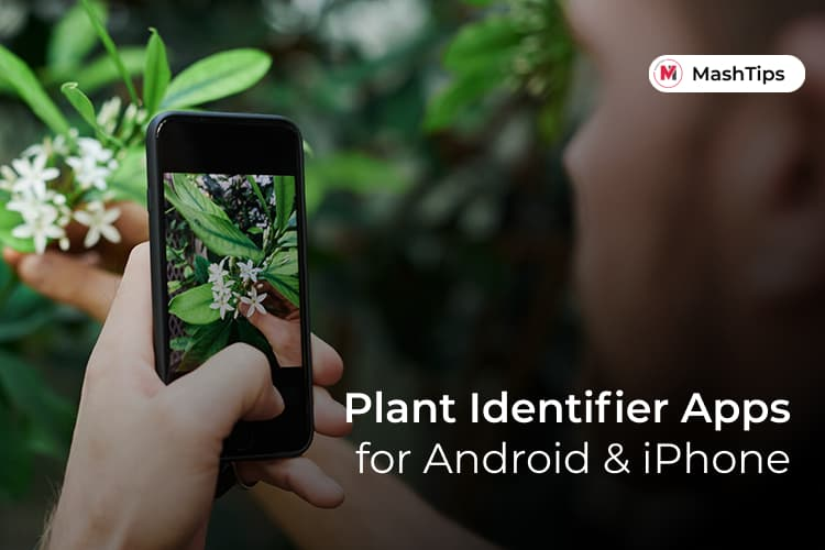 Best Plant Identifier Apps Android iPhone